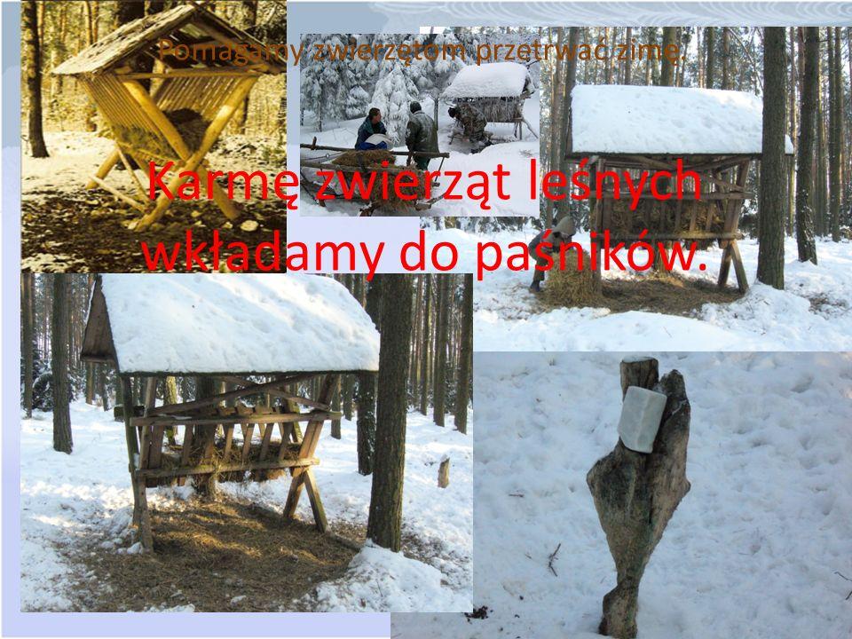 Pomagamy zwierzętom przetrwać zimę. Karmę zwierząt leśnych wkładamy do paśników.