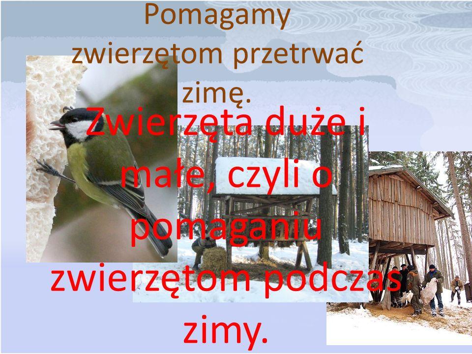 Pomagamy zwierzętom przetrwać zimę. Zwierzęta duże i małe, czyli o pomaganiu zwierzętom podczas zimy.