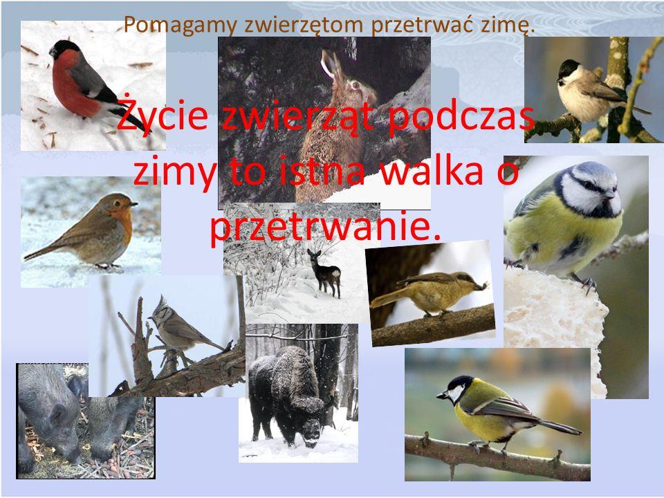 Pomagamy zwierzętom przetrwać zimę. Życie zwierząt podczas zimy to istna walka o przetrwanie.