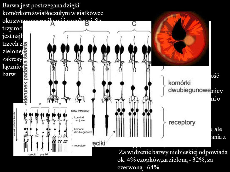 Barwa jest postrzegana dzięki komórkom światłoczułym w siatkówce oka zwanym pręcikami i czopkami.