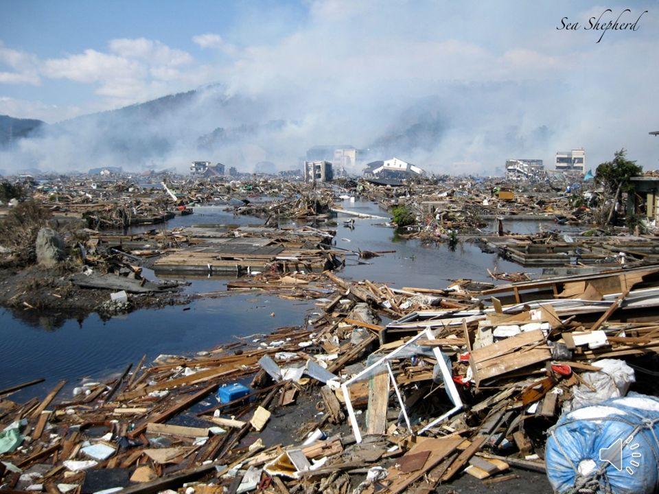 Historyczne tsunami 11 marca 2011 – po silnym trzęsieniu ziemi u wybrzeży Japonii 26 grudnia 2004 – trzęsienie ziemi na Oceanie Indyjskim. Zniszczyło