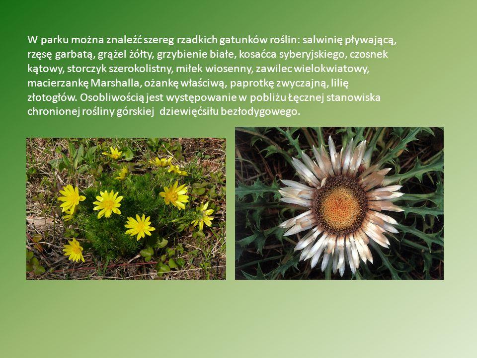 W parku można znaleźć szereg rzadkich gatunków roślin: salwinię pływającą, rzęsę garbatą, grążel żółty, grzybienie białe, kosaćca syberyjskiego, czosn
