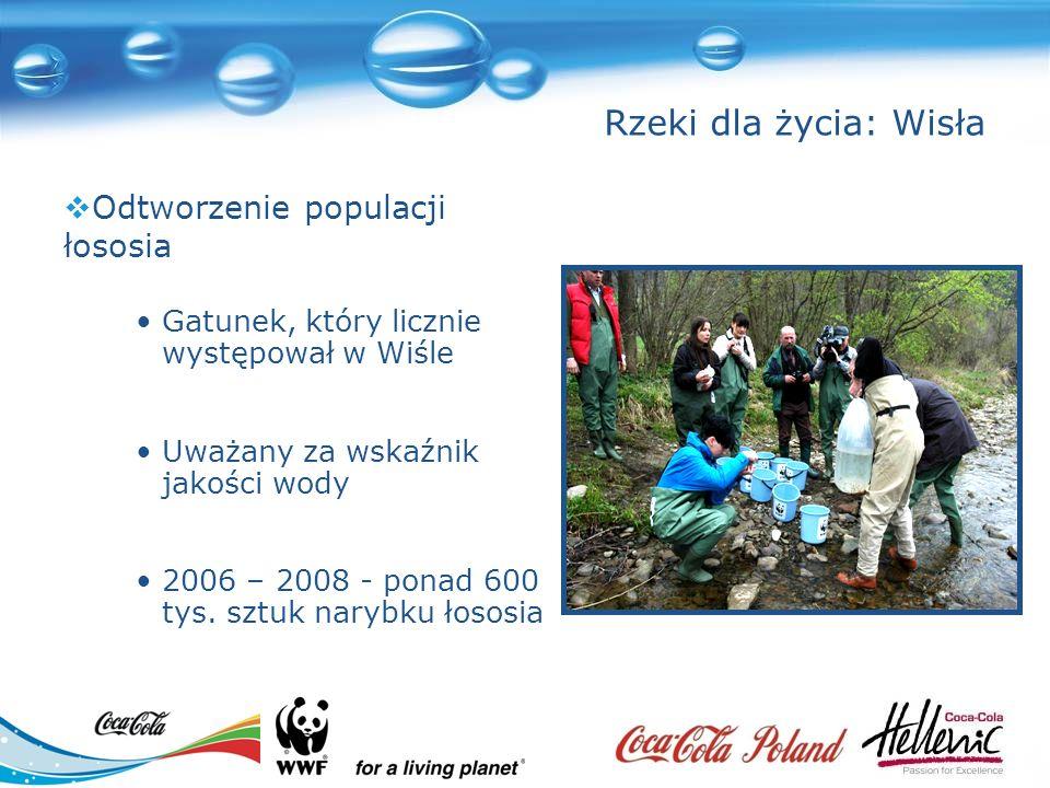 Gatunek, który licznie występował w Wiśle Uważany za wskaźnik jakości wody 2006 – 2008 - ponad 600 tys.