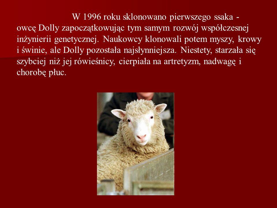W 1996 roku sklonowano pierwszego ssaka - owcę Dolly zapoczątkowując tym samym rozwój współczesnej inżynierii genetycznej. Naukowcy klonowali potem my