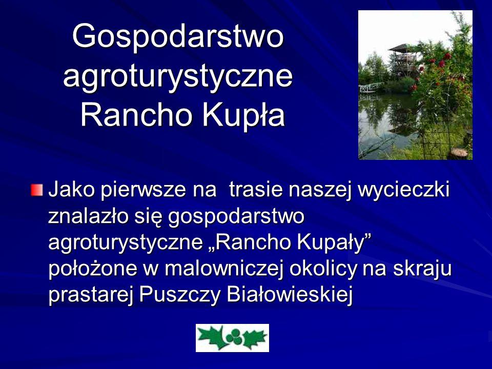 Gospodarstwo agroturystyczne Rancho Kupła Jako pierwsze na trasie naszej wycieczki znalazło się gospodarstwo agroturystyczne Rancho Kupały położone w malowniczej okolicy na skraju prastarej Puszczy Białowieskiej