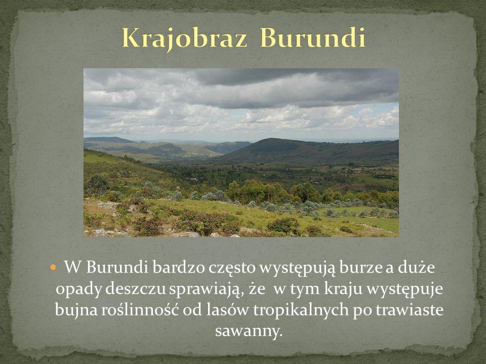 W Burundi bardzo często występują burze a duże opady deszczu sprawiają, że w tym kraju występuje bujna roślinność od lasów tropikalnych po trawiaste s