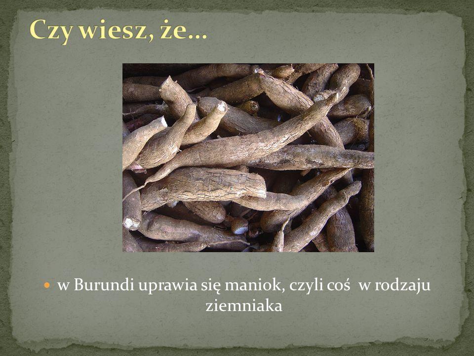 w Burundi uprawia się maniok, czyli coś w rodzaju ziemniaka