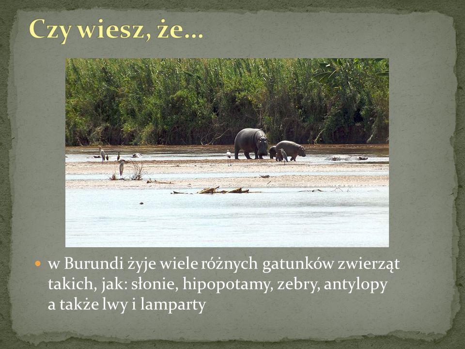 w Burundi żyje wiele różnych gatunków zwierząt takich, jak: słonie, hipopotamy, zebry, antylopy a także lwy i lamparty