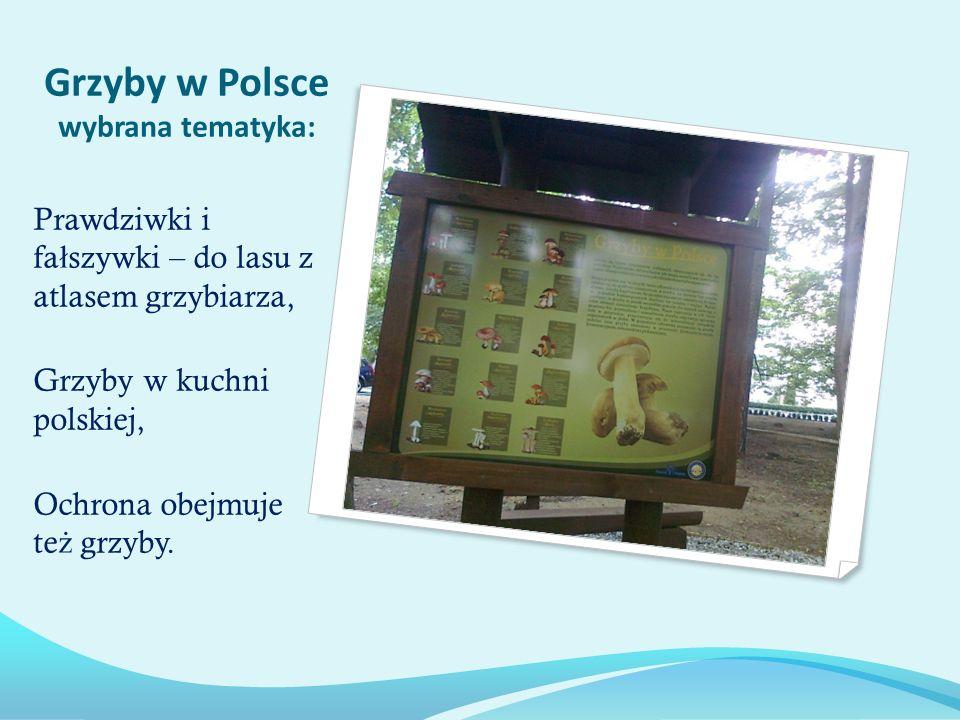 Grzyby w Polsce wybrana tematyka: Prawdziwki i fa ł szywki – do lasu z atlasem grzybiarza, Grzyby w kuchni polskiej, Ochrona obejmuje te ż grzyby.