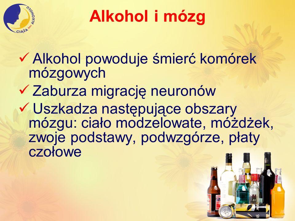 Alkohol i mózg Alkohol powoduje śmierć komórek mózgowych Zaburza migrację neuronów Uszkadza następujące obszary mózgu: ciało modzelowate, móżdżek, zwo