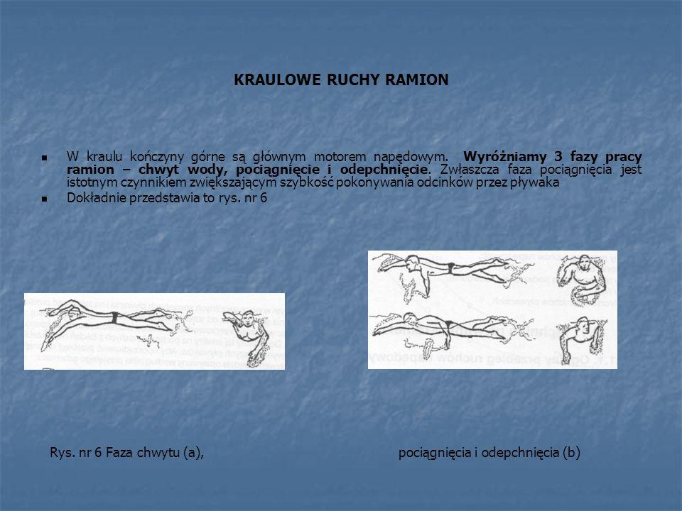KRAULOWE RUCHY RAMION W kraulu kończyny górne są głównym motorem napędowym.