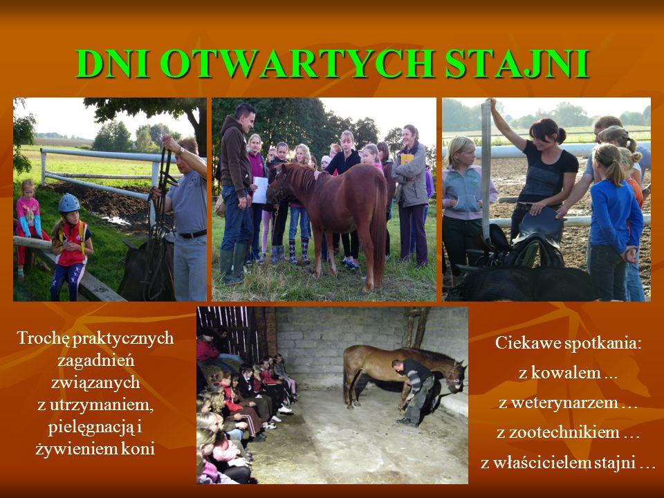 DNI OTWARTYCH STAJNI Trochę praktycznych zagadnień związanych z utrzymaniem, pielęgnacją i żywieniem koni Ciekawe spotkania: z kowalem... z weterynarz