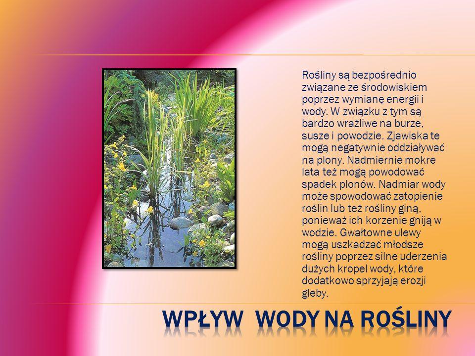 Rośliny są bezpośrednio związane ze środowiskiem poprzez wymianę energii i wody.