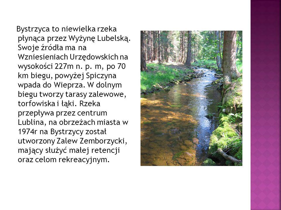 Bystrzyca to niewielka rzeka płynąca przez Wyżynę Lubelską. Swoje źródła ma na Wzniesieniach Urzędowskich na wysokości 227m n. p. m, po 70 km biegu, p