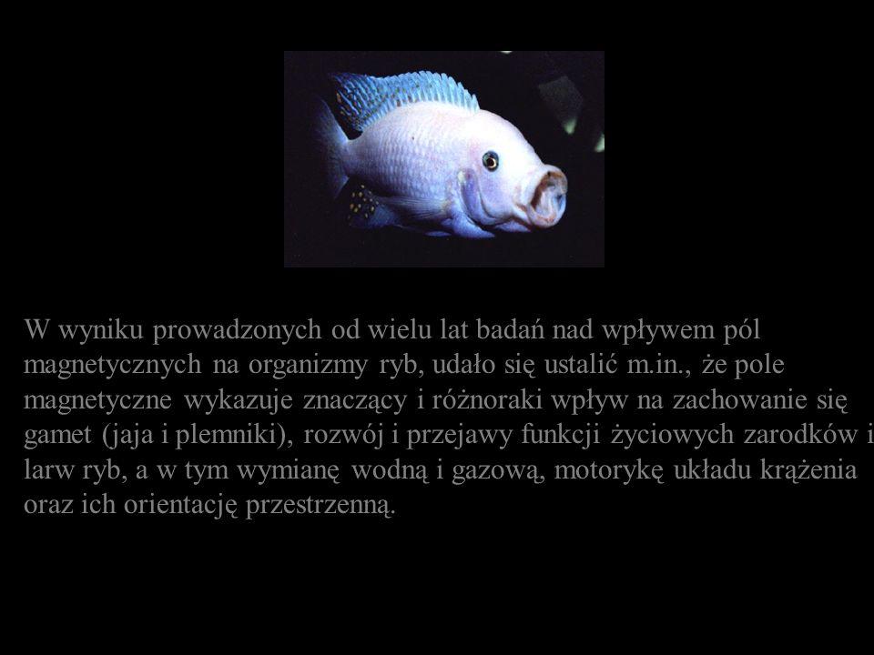 W wyniku prowadzonych od wielu lat badań nad wpływem pól magnetycznych na organizmy ryb, udało się ustalić m.in., że pole magnetyczne wykazuje znacząc