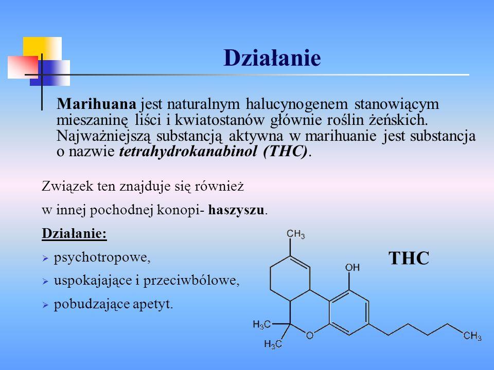 Działanie Marihuana jest naturalnym halucynogenem stanowiącym mieszaninę liści i kwiatostanów głównie roślin żeńskich. Najważniejszą substancją aktywn