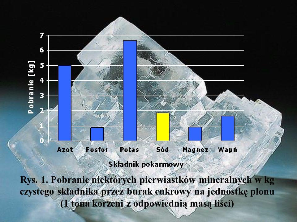Rys. 1. Pobranie niektórych pierwiastków mineralnych w kg czystego składnika przez burak cukrowy na jednostkę plonu (1 tona korzeni z odpowiednią masą