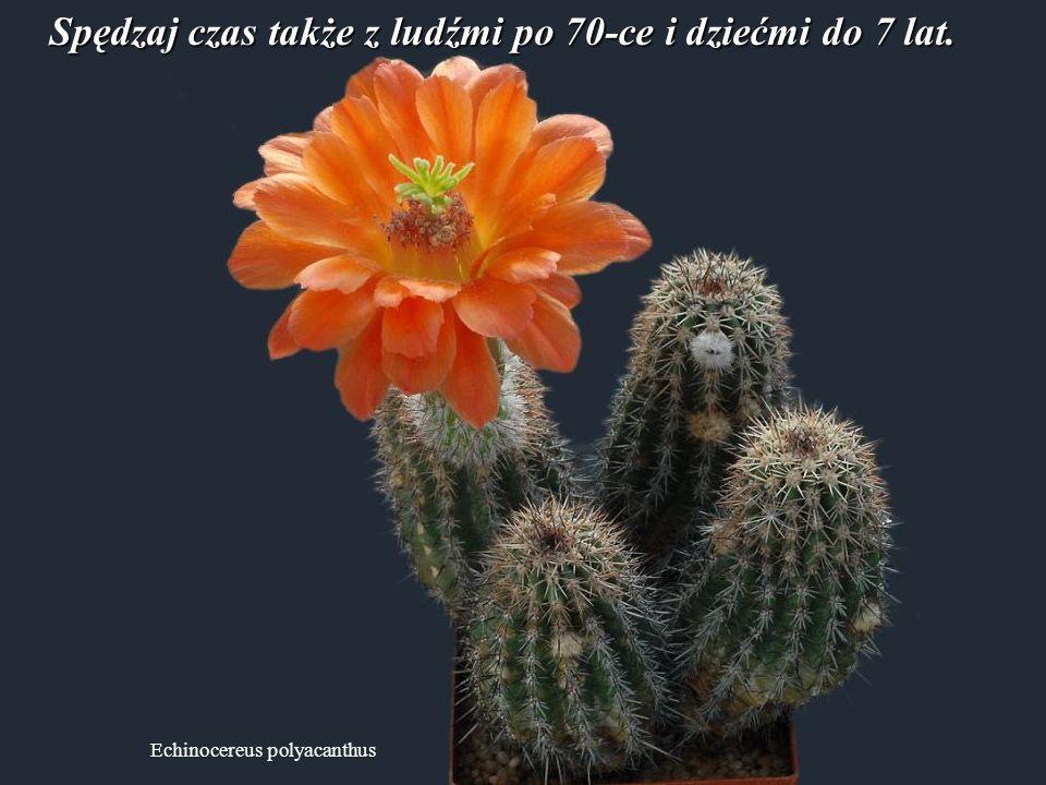 Echinocereus klapperi Porzuć negatywne myśli o rzeczach, na które nie masz wpływu. Swoją energię przeznacz do rozwiązywania bieżących problemów