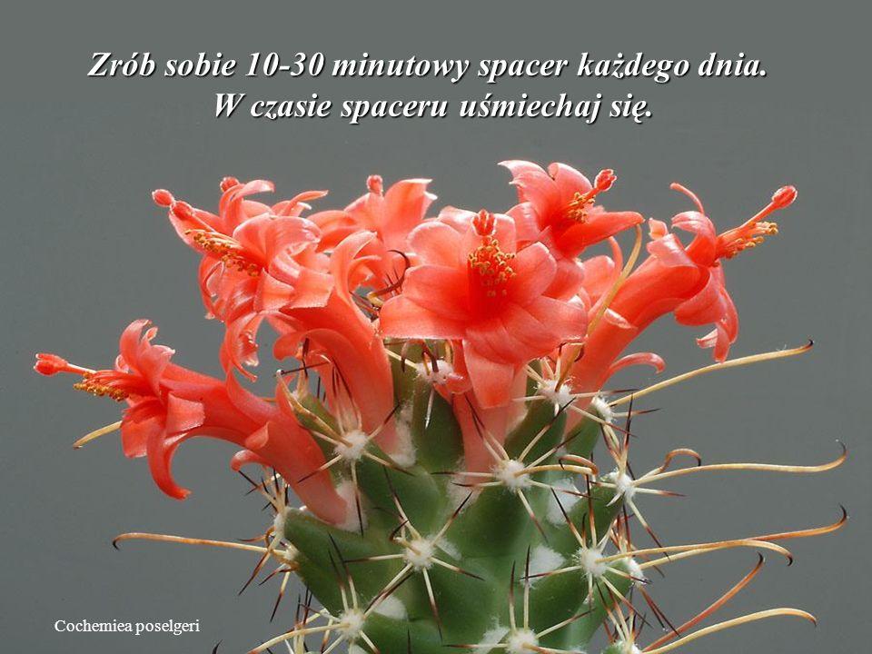 Echinomastus durangensis Nie porównuj swojego życia z innymi! Nie wiesz czym jest okupione.