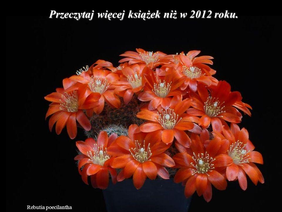 Mammillaria slevinii To co sobie myślą o Tobie inni ludzie, nic Ci do tego.