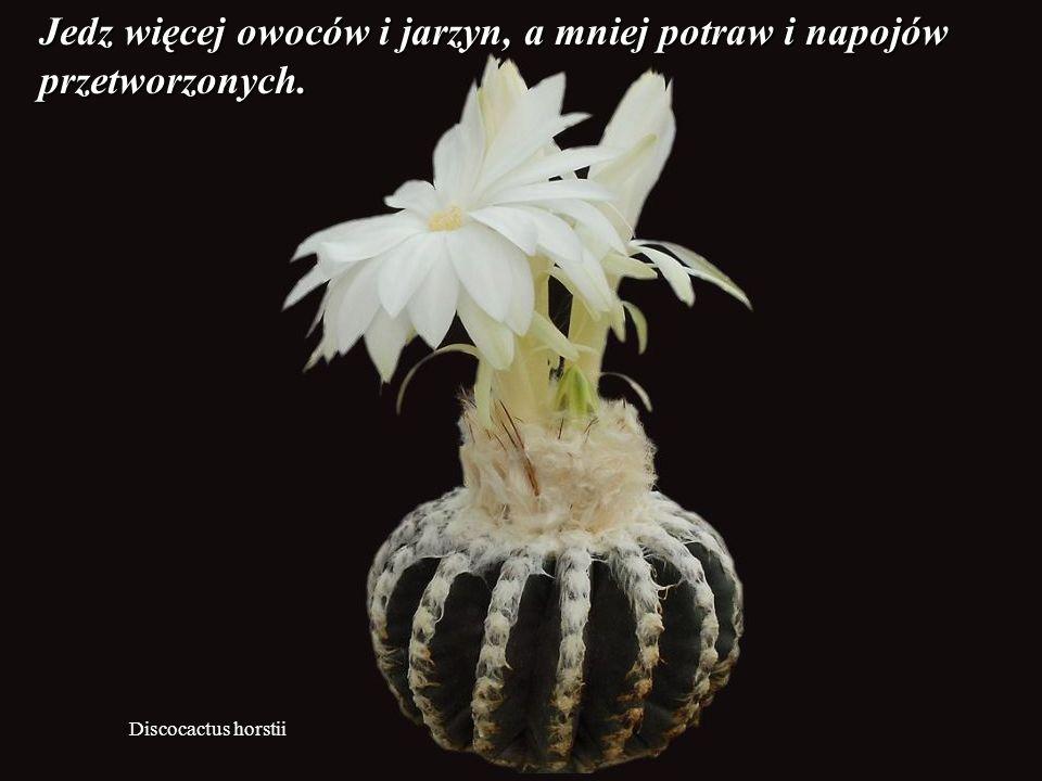 Ortegocactus macdougallii Pozbądź sie poczucia, że nie ma rzeczy dobrych, ładnych i radosnych.