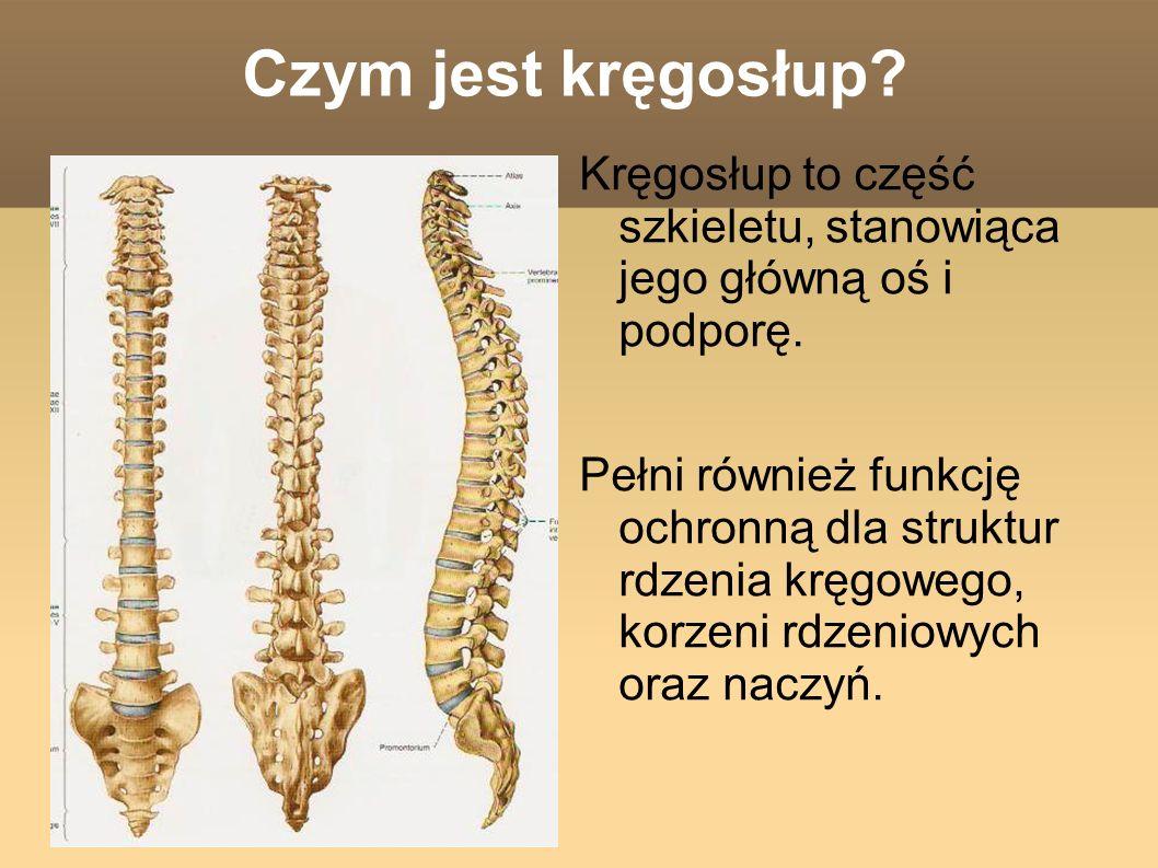Czym jest kręgosłup.Kręgosłup to część szkieletu, stanowiąca jego główną oś i podporę.