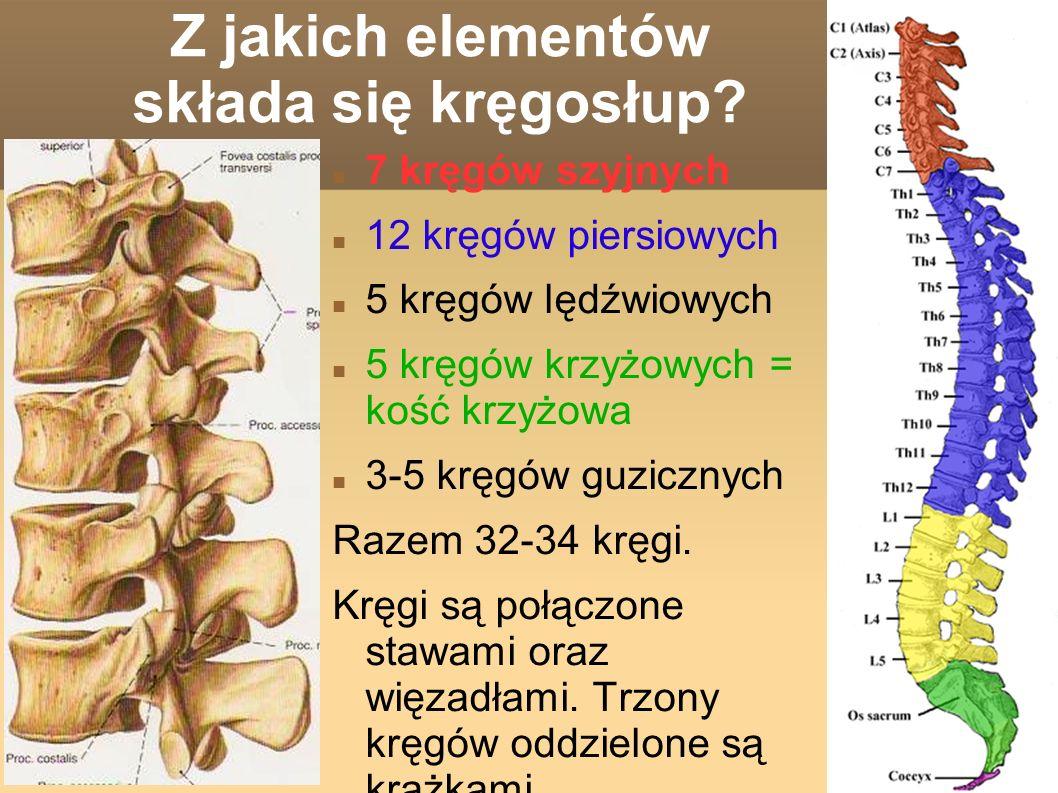 Z jakich elementów składa się kręgosłup.