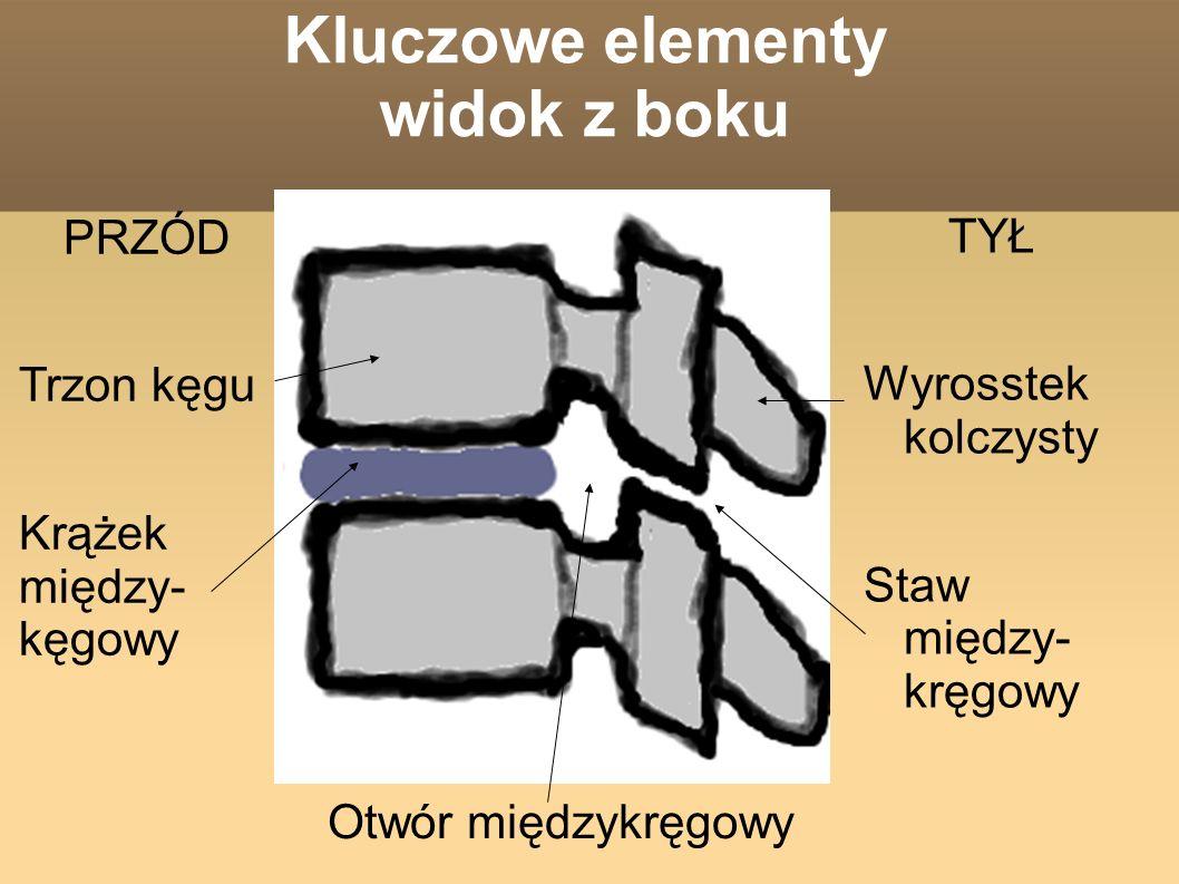 Kluczowe elementy widok z boku TYŁ Wyrosstek kolczysty Staw między- kręgowy PRZÓD Trzon kęgu Krążek między- kęgowy Otwór międzykręgowy