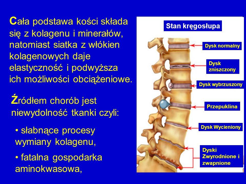 C ała podstawa kości składa się z kolagenu i minerałów, natomiast siatka z włókien kolagenowych daje elastyczność i podwyższa ich możliwości obciążeni