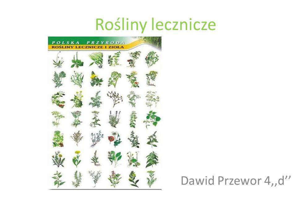 Rośliny lecznicze Dawid Przewor 4,,d