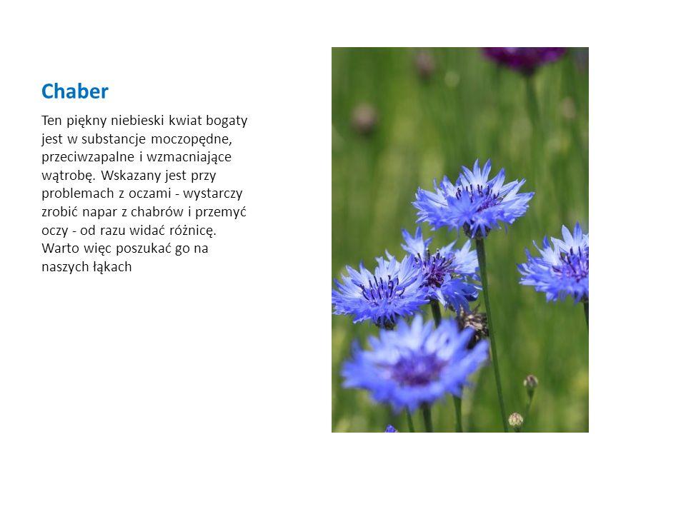 Chaber Ten piękny niebieski kwiat bogaty jest w substancje moczopędne, przeciwzapalne i wzmacniające wątrobę. Wskazany jest przy problemach z oczami -