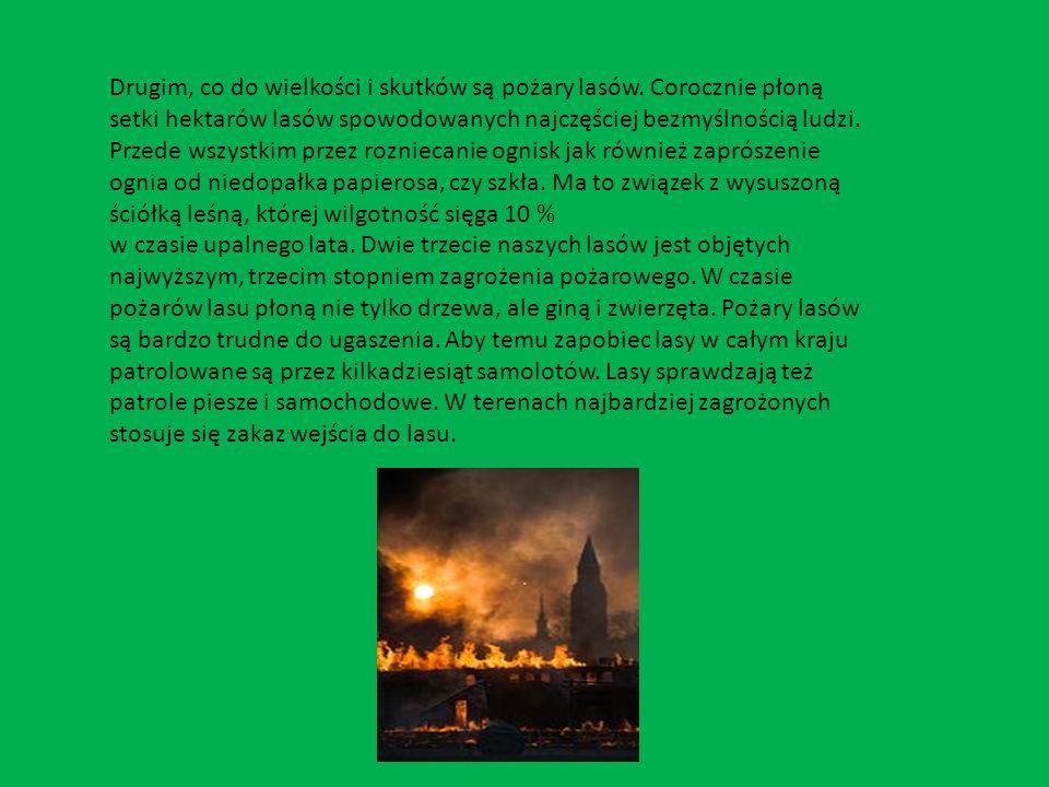 Drugim, co do wielkości i skutków są pożary lasów. Corocznie płoną setki hektarów lasów spowodowanych najczęściej bezmyślnością ludzi. Przede wszystki