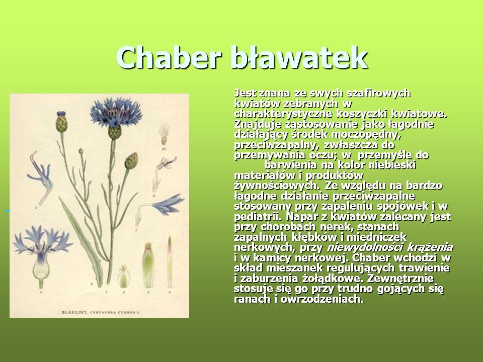 Chaber bławatek Jest znana ze swych szafirowych kwiatów zebranych w charakterystyczne koszyczki kwiatowe. Znajduje zastosowanie jako łagodnie działają