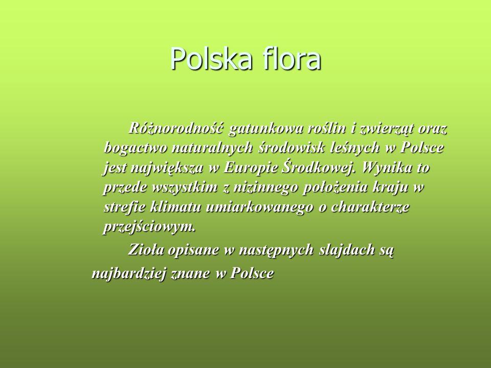 Polska flora Różnorodność gatunkowa roślin i zwierząt oraz bogactwo naturalnych środowisk leśnych w Polsce jest największa w Europie Środkowej. Wynika