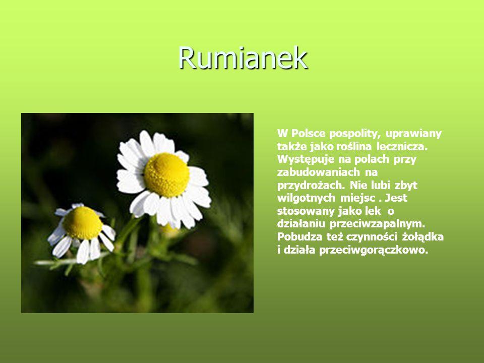 Rumianek W Polsce pospolity, uprawiany także jako roślina lecznicza. Występuje na polach przy zabudowaniach na przydrożach. Nie lubi zbyt wilgotnych m