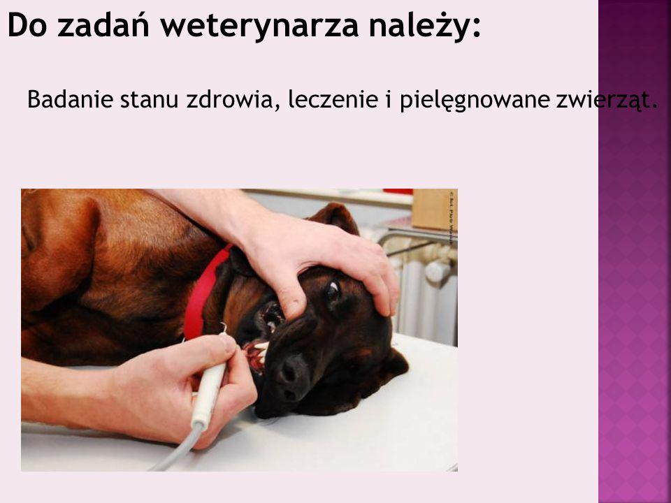 Do zadań weterynarza należy: Badanie stanu zdrowia, leczenie i pielęgnowane zwierząt.