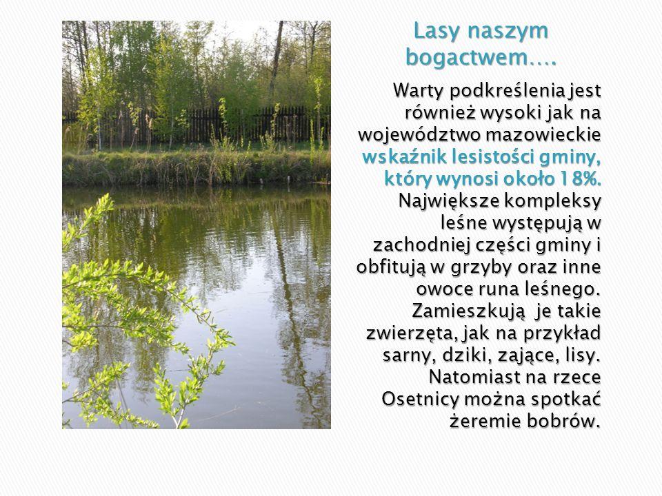 Warty podkreślenia jest również wysoki jak na województwo mazowieckie wskaźnik lesistości gminy, który wynosi około 18%. Największe kompleksy leśne wy