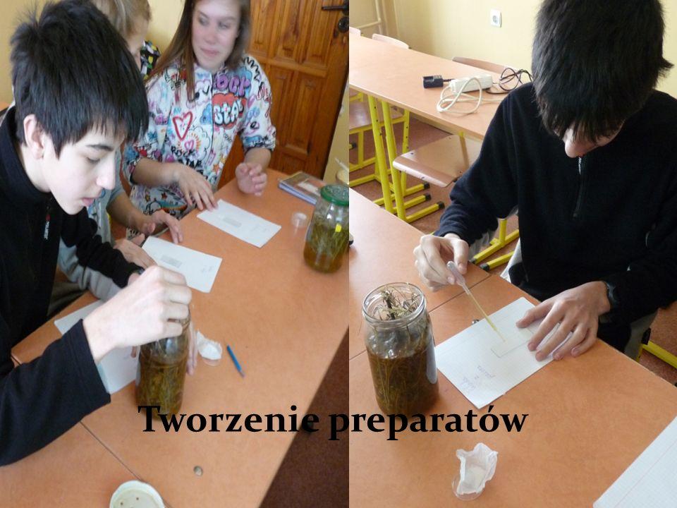 Tworzenie preparatów