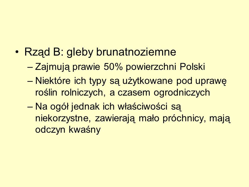 Rząd B: gleby brunatnoziemne –Zajmują prawie 50% powierzchni Polski –Niektóre ich typy są użytkowane pod uprawę roślin rolniczych, a czasem ogrodniczy
