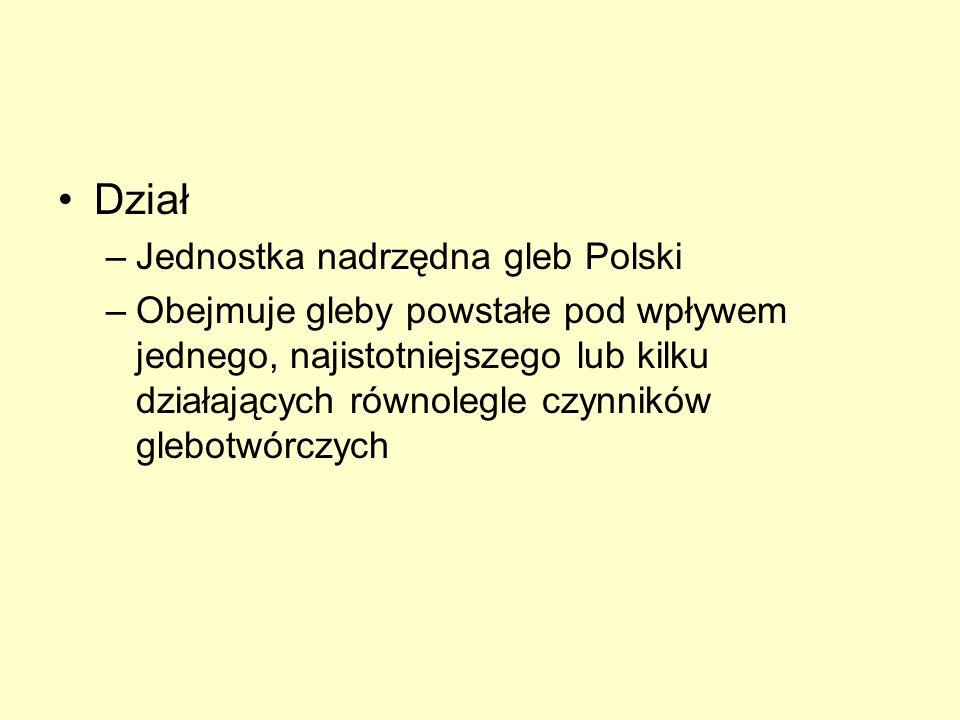 Dział –Jednostka nadrzędna gleb Polski –Obejmuje gleby powstałe pod wpływem jednego, najistotniejszego lub kilku działających równolegle czynników gle