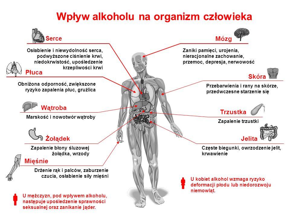 Wpływ alkoholu na organizm człowieka Osłabienie i niewydolność serca, podwyższone ciśnienie krwi, niedokrwistość, upośledzenie krzepliwości krwi Serce Obniżona odporność, zwiększone ryzyko zapalenia płuc, gruźlica Płuca Marskość i nowotwór wątroby Wątroba Drżenie rąk i palców, zaburzenie czucia, osłabienie siły mięśni Mięśnie Częste biegunki, owrzodzenie jelit, krwawienie Jelita Zapalenie trzustki Trzustka Przebarwienia i rany na skórze, przedwczesne starzenie się Skóra Zaniki pamięci, urojenia, nieracjonalne zachowanie, przemoc, depresja, nerwowość Mózg Zapalenie błony śluzowej żołądka, wrzody Żołądek U mężczyzn, pod wpływem alkoholu, następuje upośledzenie sprawności seksualnej oraz zanikanie jąder.