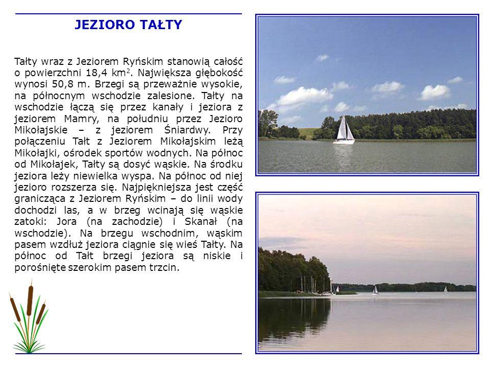 Tałty wraz z Jeziorem Ryńskim stanowią całość o powierzchni 18,4 km 2. Największa głębokość wynosi 50,8 m. Brzegi są przeważnie wysokie, na północnym