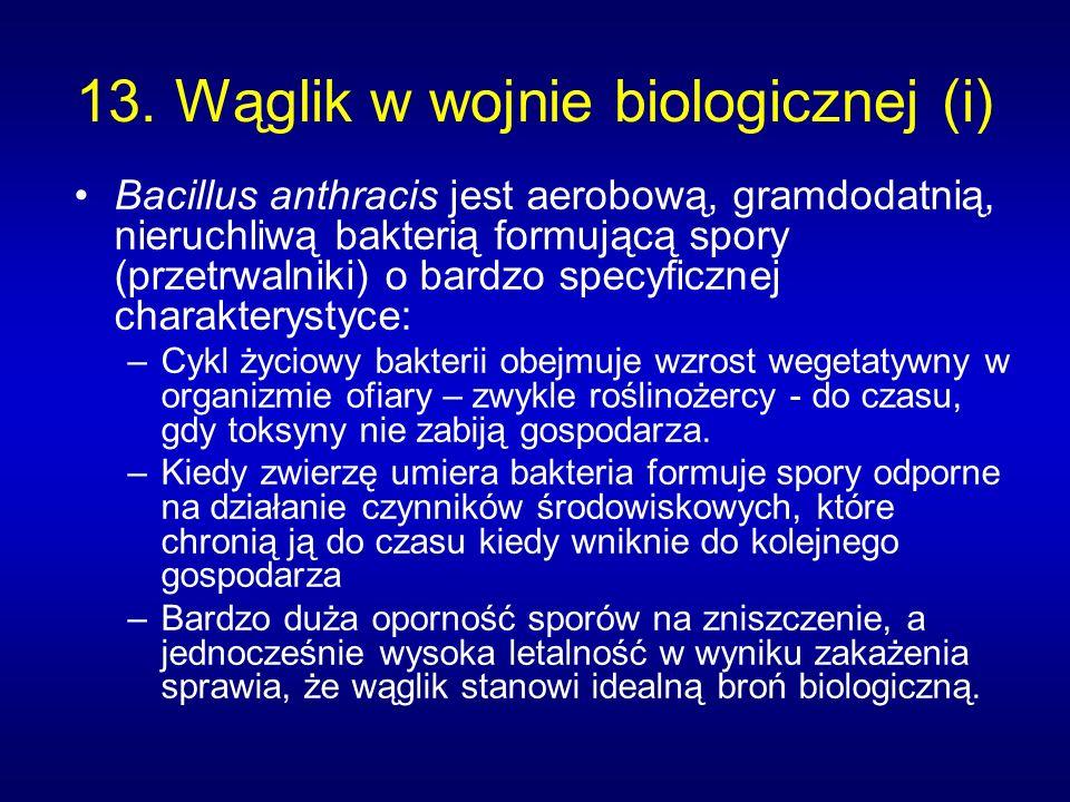 13. Wąglik w wojnie biologicznej (i) Bacillus anthracis jest aerobową, gramdodatnią, nieruchliwą bakterią formującą spory (przetrwalniki) o bardzo spe