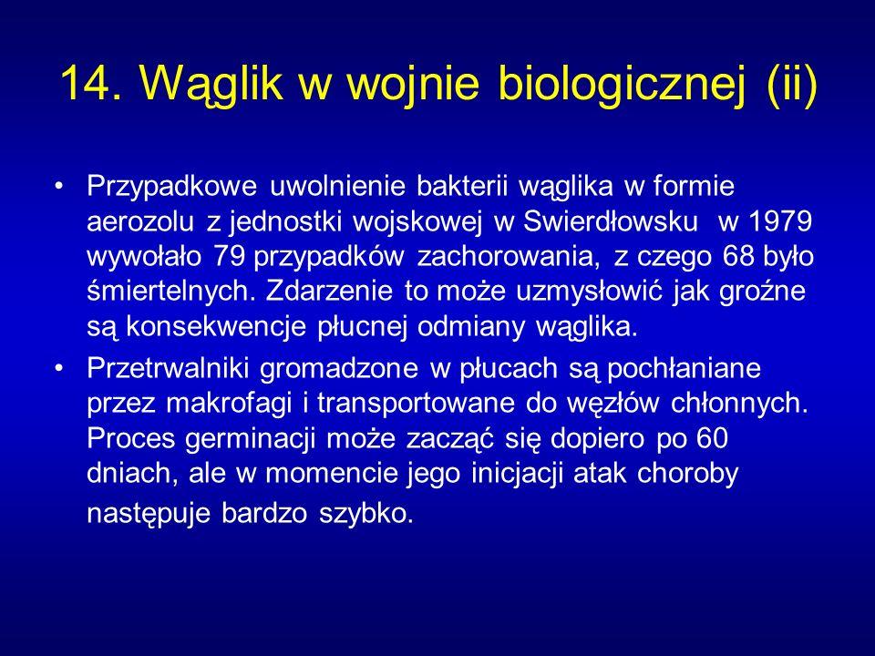 14. Wąglik w wojnie biologicznej (ii) Przypadkowe uwolnienie bakterii wąglika w formie aerozolu z jednostki wojskowej w Swierdłowsku w 1979 wywołało 7
