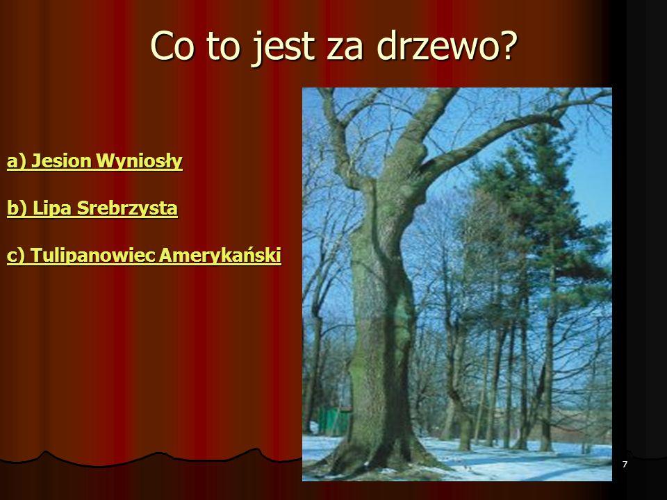 7 Co to jest za drzewo.