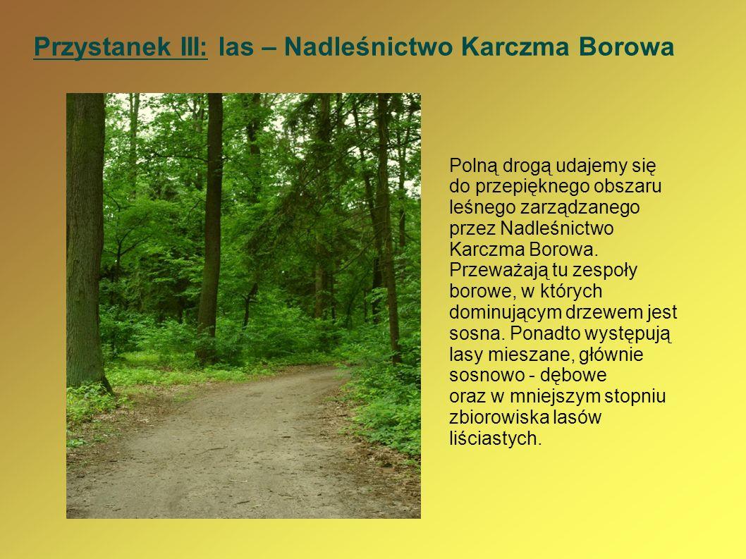 Przystanek III: las – Nadleśnictwo Karczma Borowa Polną drogą udajemy się do przepięknego obszaru leśnego zarządzanego przez Nadleśnictwo Karczma Boro