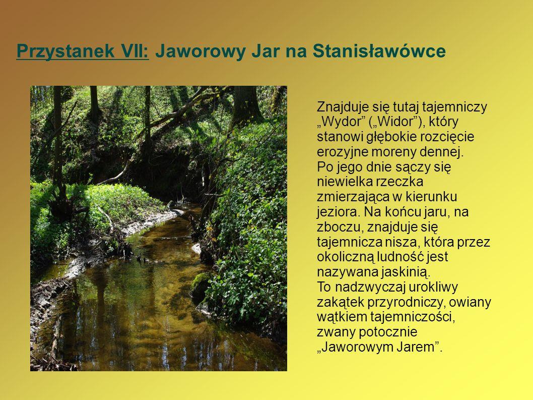 Przystanek VII: Jaworowy Jar na Stanisławówce Znajduje się tutaj tajemniczy Wydor (Widor), który stanowi głębokie rozcięcie erozyjne moreny dennej. Po