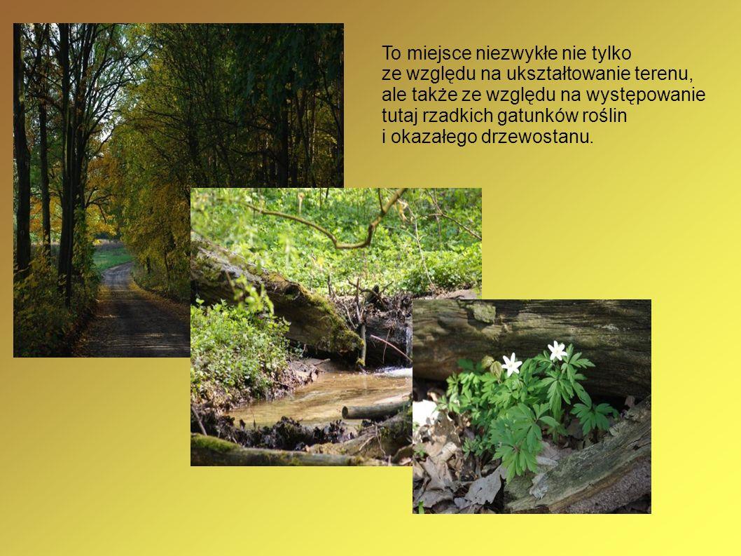 To miejsce niezwykłe nie tylko ze względu na ukształtowanie terenu, ale także ze względu na występowanie tutaj rzadkich gatunków roślin i okazałego dr