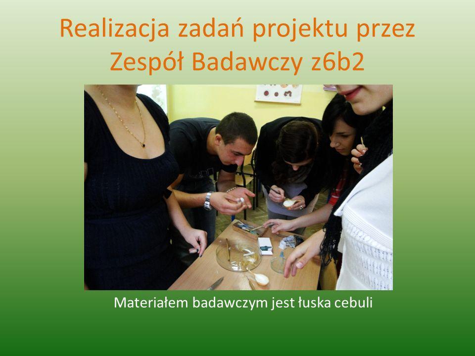 Realizacja zadań projektu przez Zespół Badawczy z6b2 Materiałem badawczym jest łuska cebuli