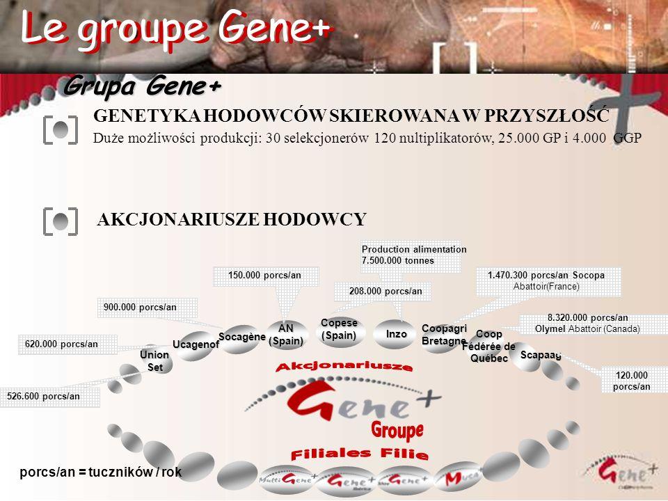 Grupa Gene+ GENETYKA HODOWCÓW SKIEROWANA W PRZYSZŁOŚĆ Duże możliwości produkcji: 30 selekcjonerów 120 nultiplikatorów, 25.000 GP i 4.000 GGP AKCJONARI